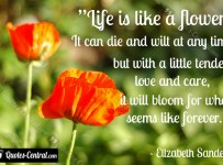 life_is_like_a_flower