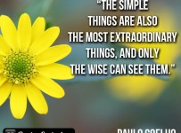 the-simple-things-are-also
