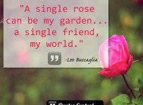 a-single-rose-can-be-my-garden-a-single-friend-my-world