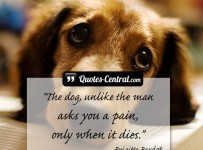 the-dog-unlike-the-man-asks-you-a-pain