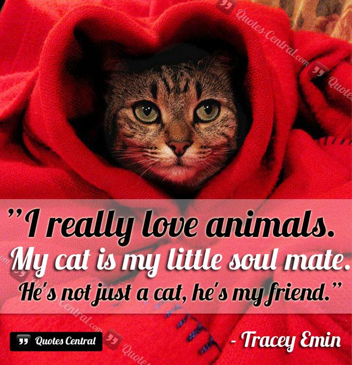 i_really_love_animls
