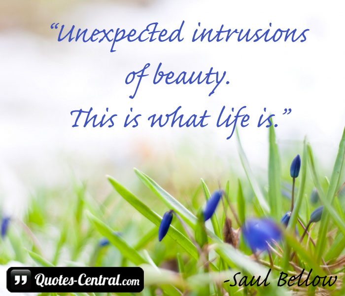 unexpected-intrusions-of-beauty