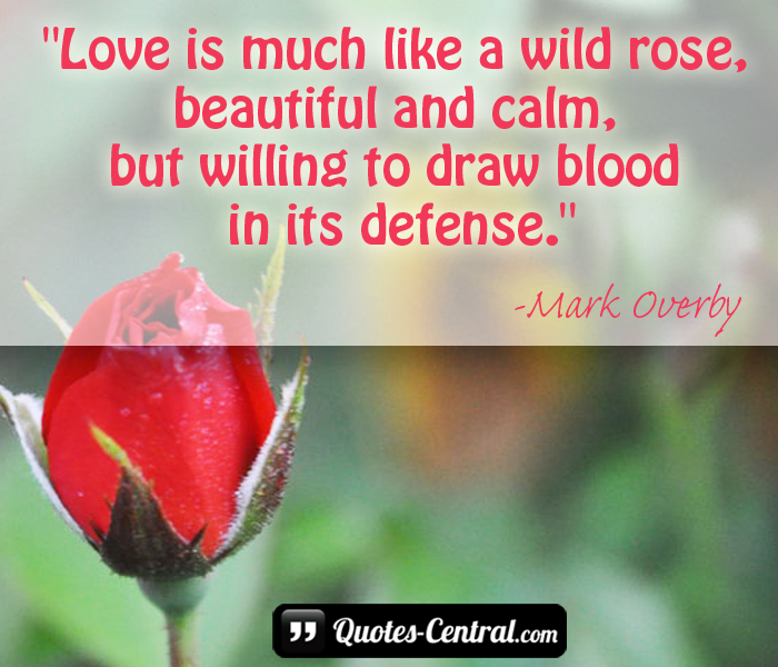 love-is-much-like-a-wild-rose