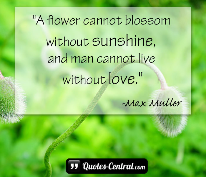 a-flower-cannot-blossom-without-sunshine